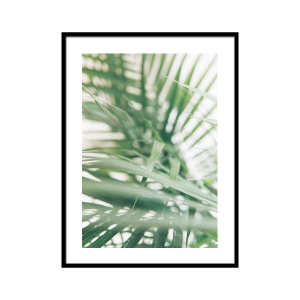 Green palm - plakat