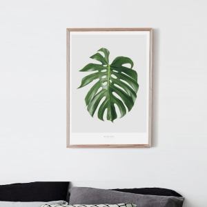 Monstera - plakat